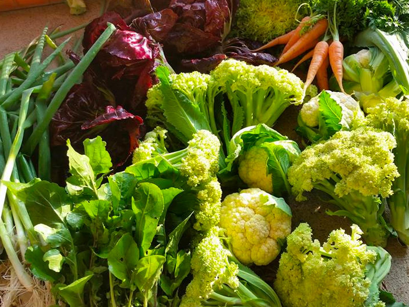 「from the farm 京丹波 高橋農園」で収穫体験。無農薬&自然農法で作られた野菜は安全、安心で何より絶品。ランチタイムは農園の木陰でビーガンランチ、スイーツをたっぷりどうぞ。